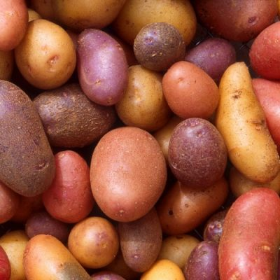 Why we need to dig potatoes