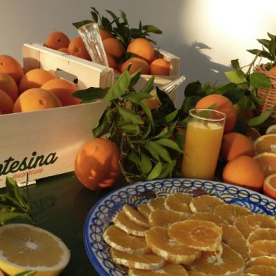 Valencian Citrus